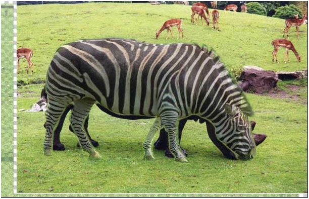 Create a Morph in Photoshop Tutorial Half Girl-Half Tiger ...